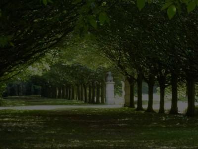 Portfolio AB Tree Care Feature